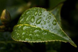 waterdrops7_DSC7332.jpg